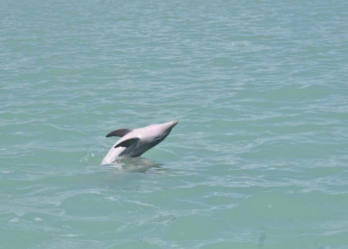 a dolphin in sian ka'an