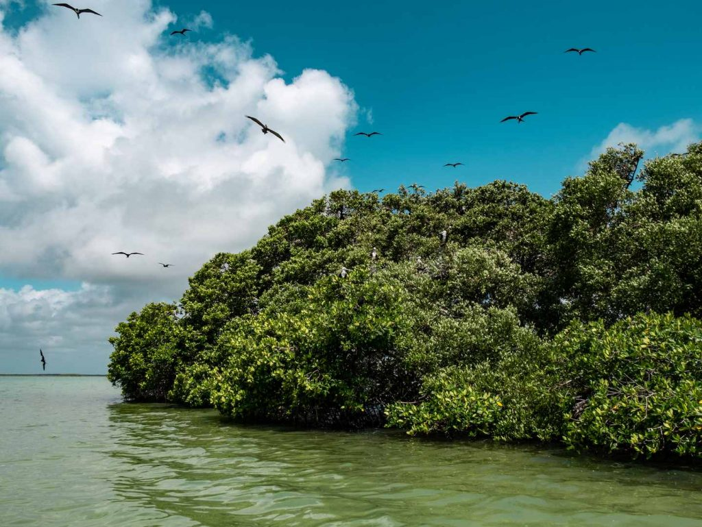 bird island punta allen